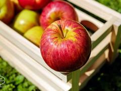 روز جهانی خوردن سیب