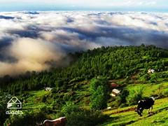 رکاب زنی با جنگل و مه، دوچرخه سواری جنگلی از کلاردشت تا مازیچال 1
