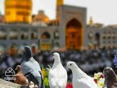 از خشت تا آسمان، راهنمای گردشگری در مقبره امامزاده محمد(ع) مشهد