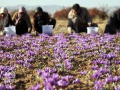 استان خراسان جنوبی؛ زمستان زعفرانی