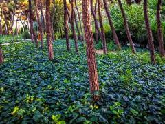پارک جنگلی سراوان؛ از دیدنی های استان گیلان+ فیلم و عکس